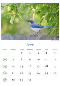 2010年6月のカレンダー