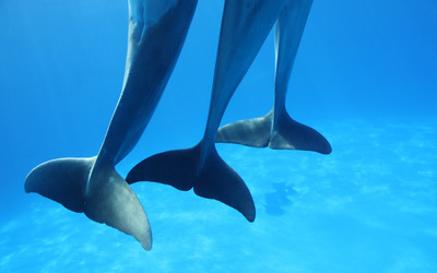 dancing_dolphins.jpg