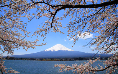 Mt.Fuji and sakura