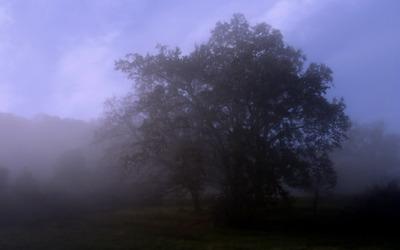 fog_break.jpg
