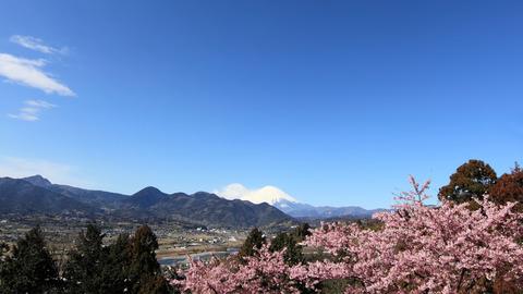 Sakura_and_MtFuji_wqhd.jpg