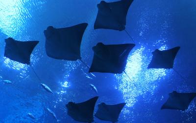 Fleet of Rays