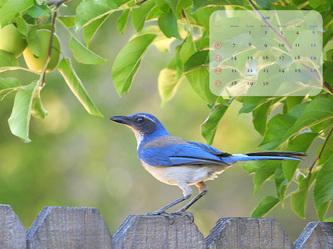 calendar201006_4x3.jpg