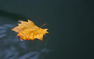 silly_leaf.jpg