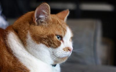 thinking_cat.jpg