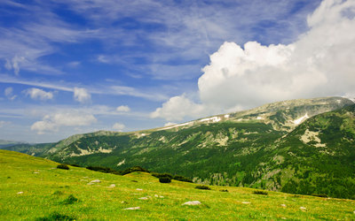 green_alpine_meadows.jpg