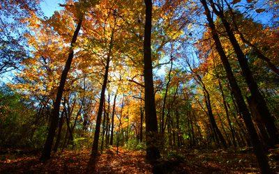 Madison_Arboretum.jpg