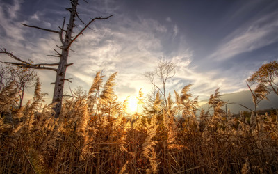 Marshland_Grass.jpg