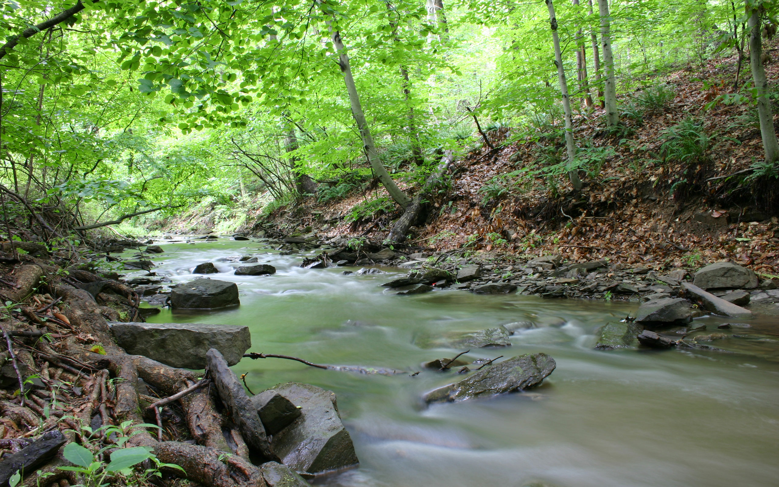 今日の壁紙] Eagleville の小川 ...